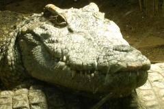 Zoo de Servion